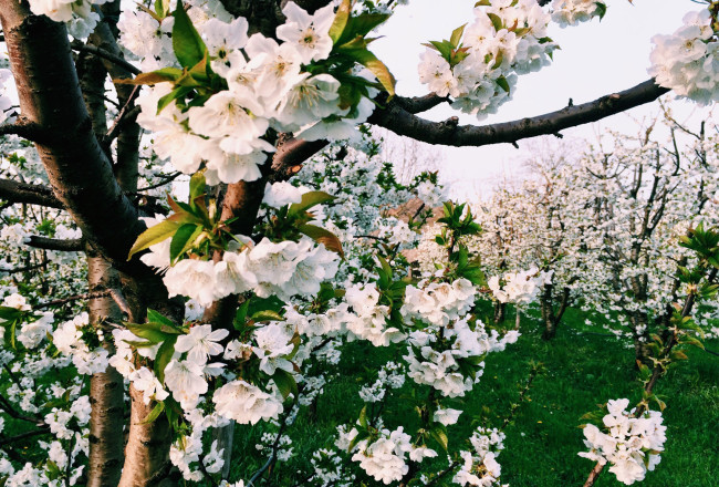 Primavera_Modena_MyModenaDiary