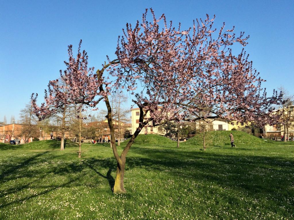 Primavera a Modena - Parco Amendola by My Modena Diary