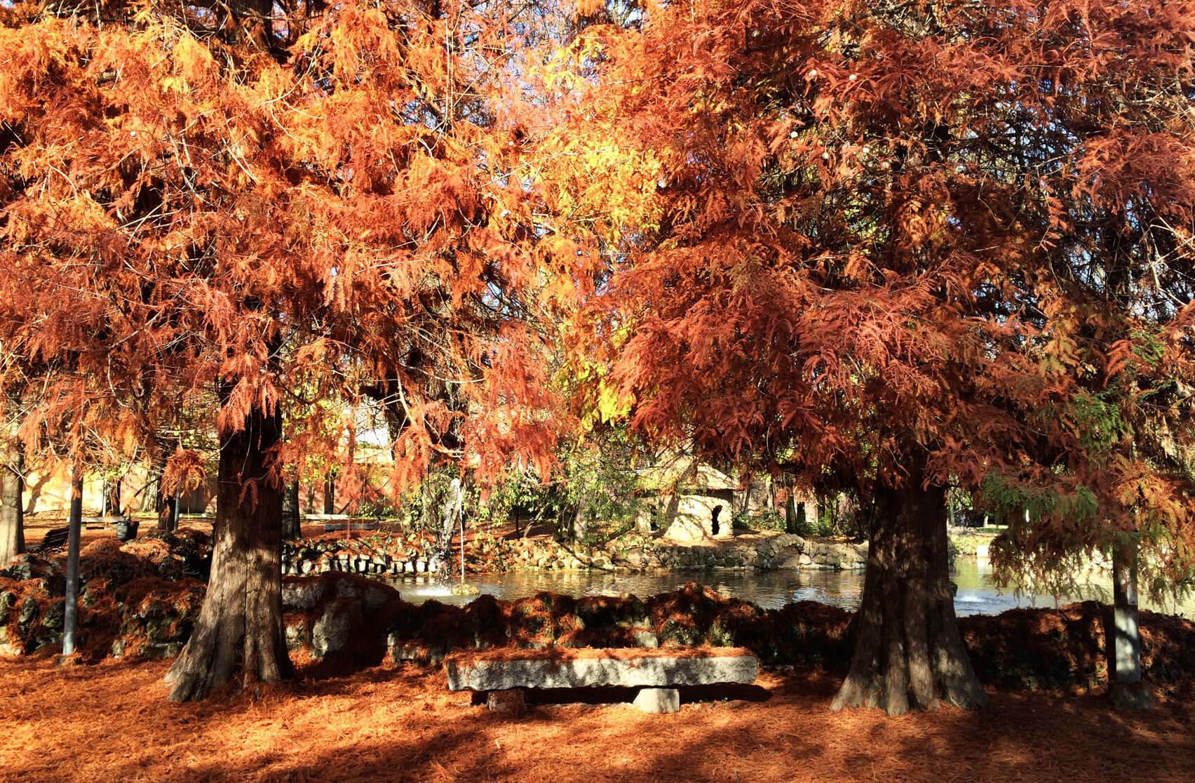Foliage_Modena_GiardiniDucali_02