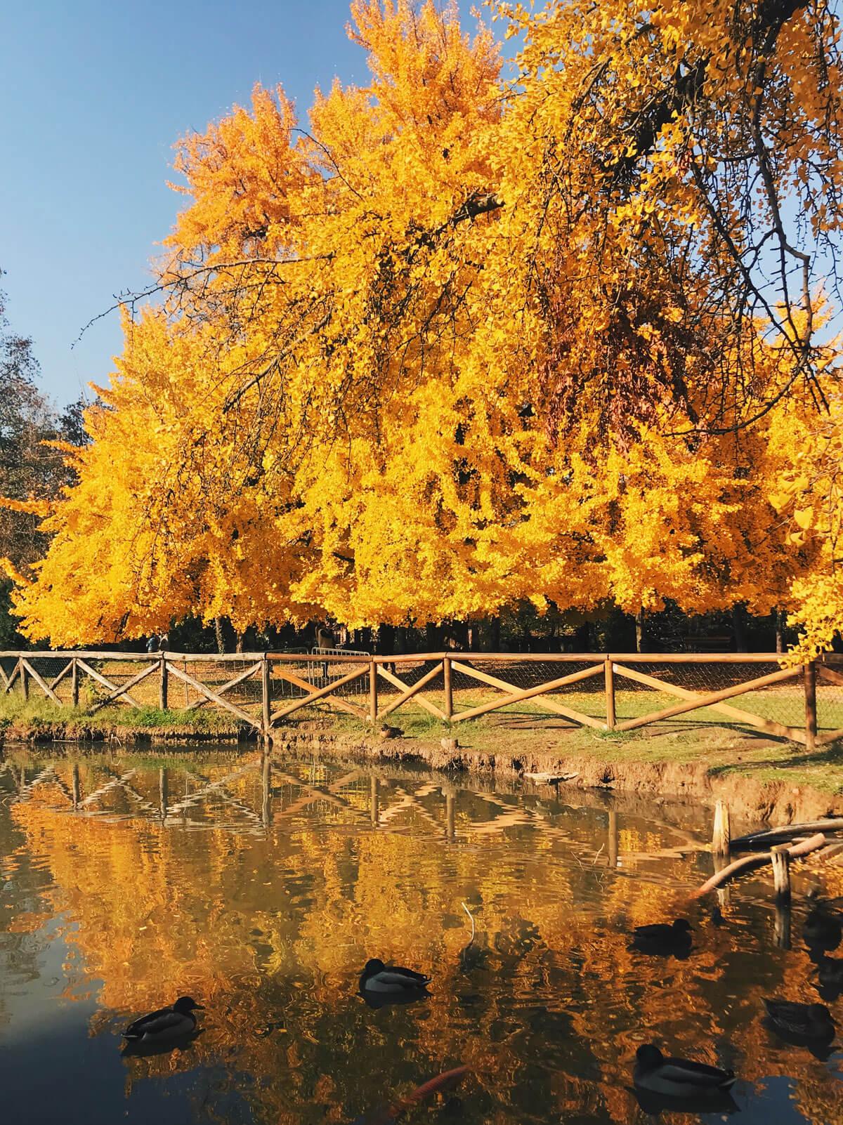 Foliage_Modena_Gingko_VillaAggazzotti_Formigine